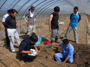 「ふらの土の会」定期土壌診断調査(2016年9月)